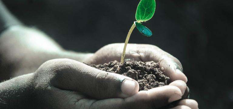 Dues mans lliurant un grapat de sorra d'on neix una planta
